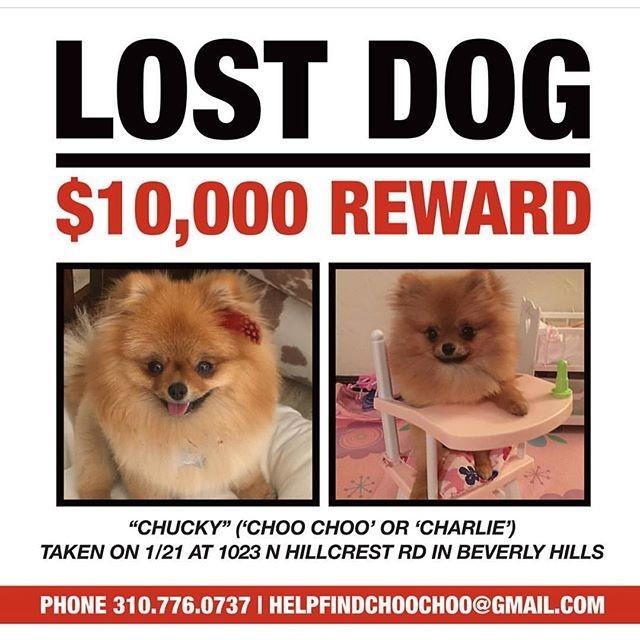 Періс Гілтон оголосила нагороду за вкрадену собаку
